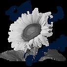Logo_WIXDarkBlue.png