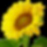 FlowerTransparent.png