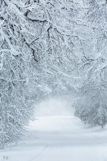 Winter Road, Zaube, Latvia