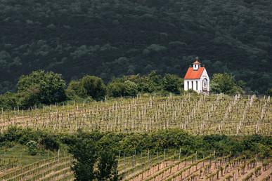 Hillside Vineyards, Austria