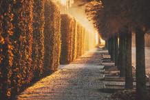 Follow the Light
