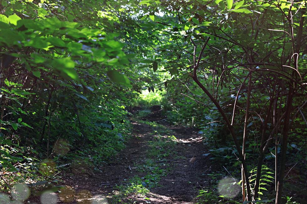 Farm Forest Meditation Rockland