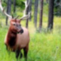 Deer in the Woods_edited.jpg