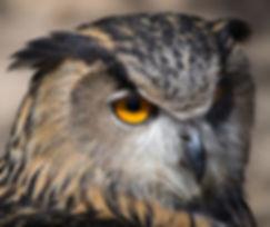 Close Up Owl_edited.jpg