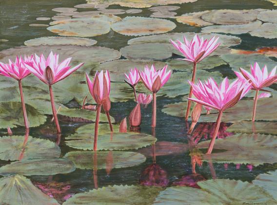 WATER LILIES...ANGKOR WAT, CAMBODIA