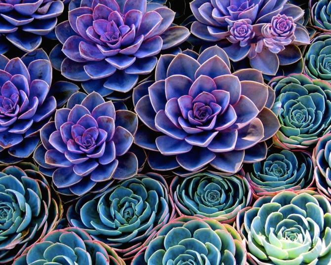 Decoration with Succulent Plants.