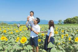 ひまわり畑で家族写真撮影