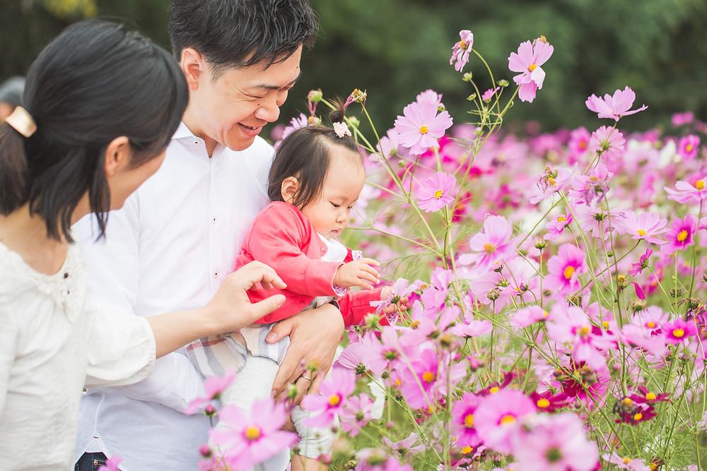 大阪府吹田市の万博記念公園でコスモス畑と1歳のお誕生日記念撮影