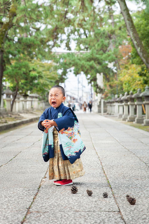 滋賀県長浜市の長浜八幡宮で松ぼっくり大作戦な七五三を出張撮影しました