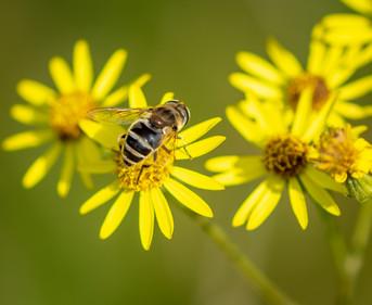 'Pollination'