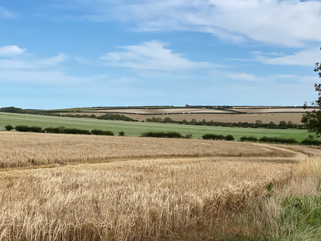Market Weighton to Londesborough - a Circular walk in the Yorkshire Wolds