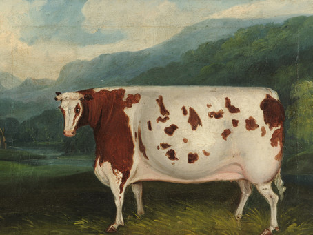 History of The Craven Heifer