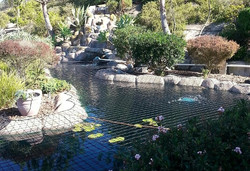 Complex Pond Shape Safety