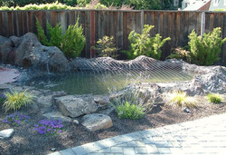 Fish Pond Safety