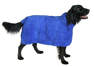 a black dog wearing a microfiber dog towel