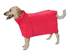 Labradoodle in her fast drying moisture absorbent dog bathing towel