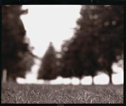 Ozzie Trees.jpg