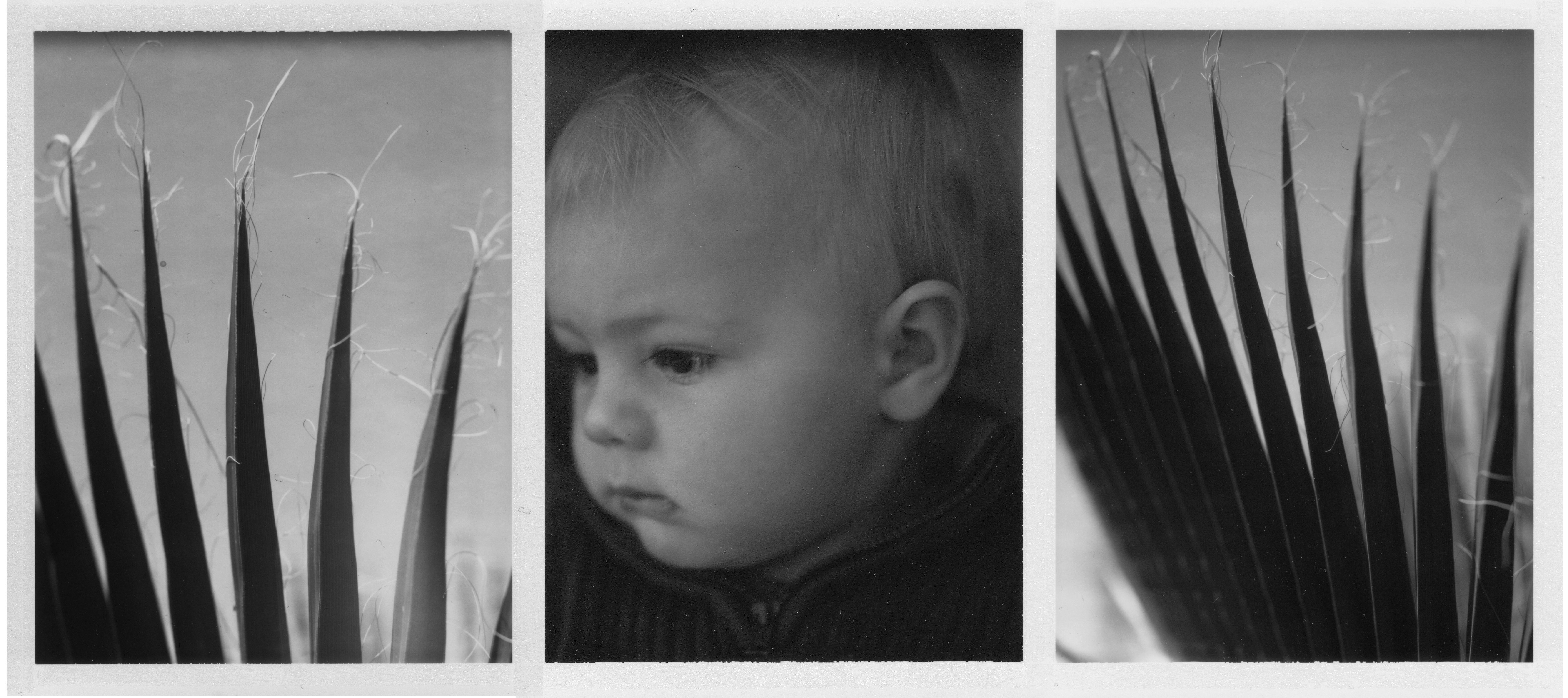 Palmetto Bug Triptych.jpg