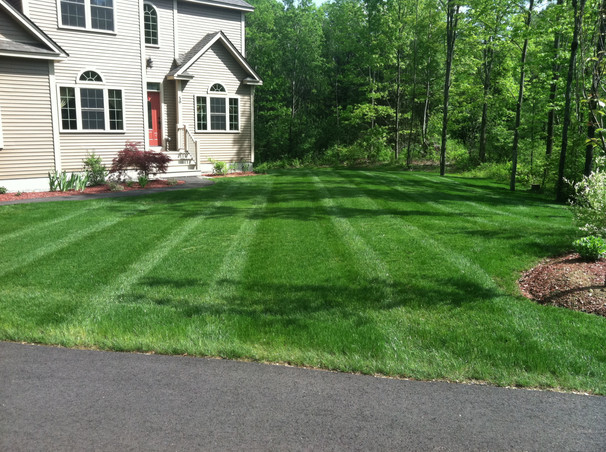 Hydroseed Front Lawn
