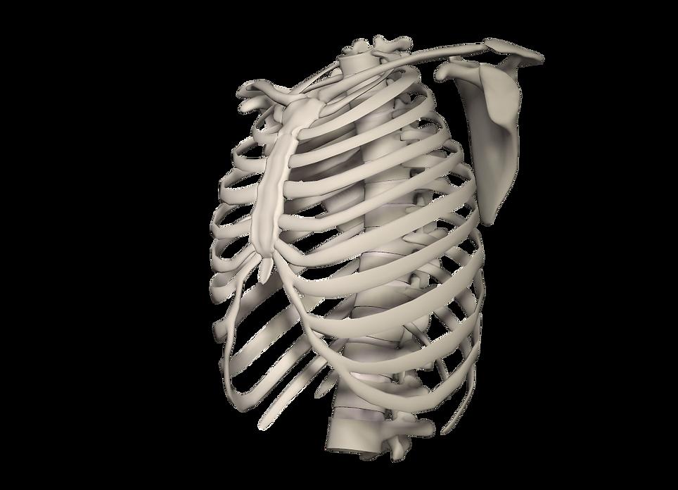 胸郭運動システムアプローチ講座