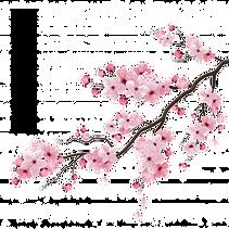 sakura-branch.png