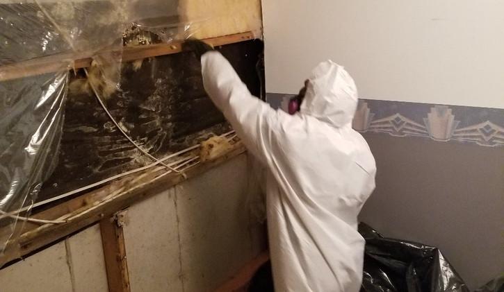 Mould in Drywall.jpg