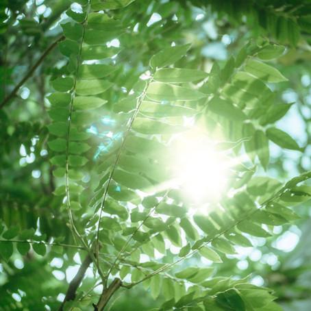 GLOBU Lifestyle: Straal licht uit
