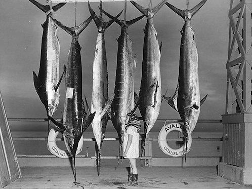 Big Catch: Photo No. 002
