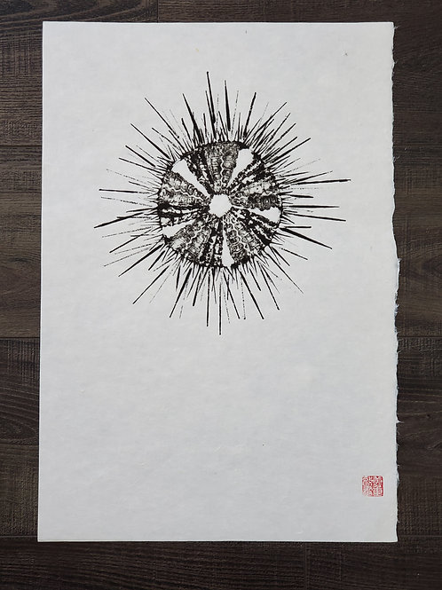 Sea Urchin Washi Print