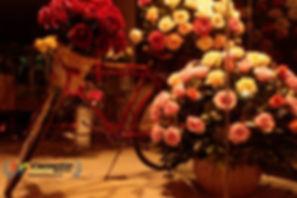 Cornelia Rosas DOn Eloy.jpg