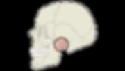 אבחון וטיפול בהפרעות במפרקי הלסת ו/או שרירי הלעיסה