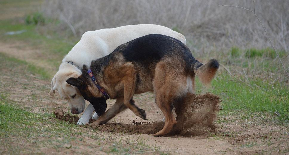 אורית זנגביל למברט | מומחית להתנהגו כלבים | פתרון בעית התנהגות