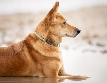אורית זנגביל למברט | מומחית להתנהגו כלבים | פתרון בעיות התנהגות