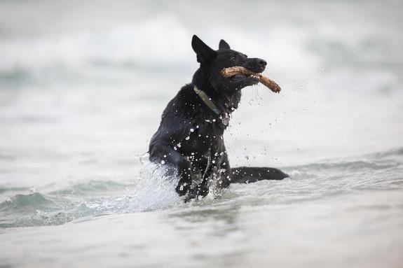 אורית זנגביל למברג| מומחית להתנהגות כלבים