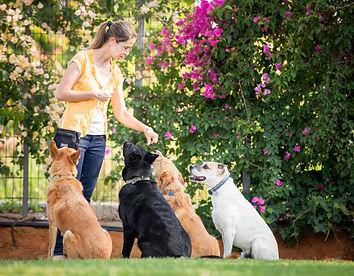 אורית זנגביל למברט | מומחית להתנהגו כלבים | תחומי פעילות | אילוף בסיסי