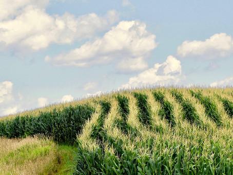 Indigo's Partnership with Anheuser-Busch: A Major Step Towards Beneficial Agriculture