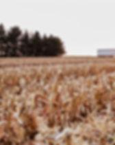Indigo_Transport_Grain_Hopper_Image_2_Ov
