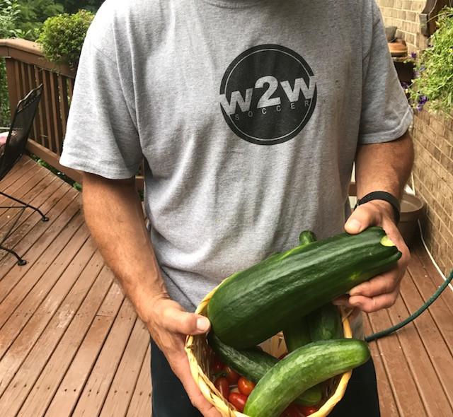 our garden zucchini