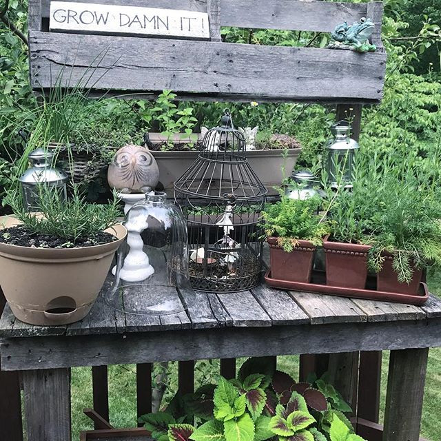 My potting bench with our herbs!