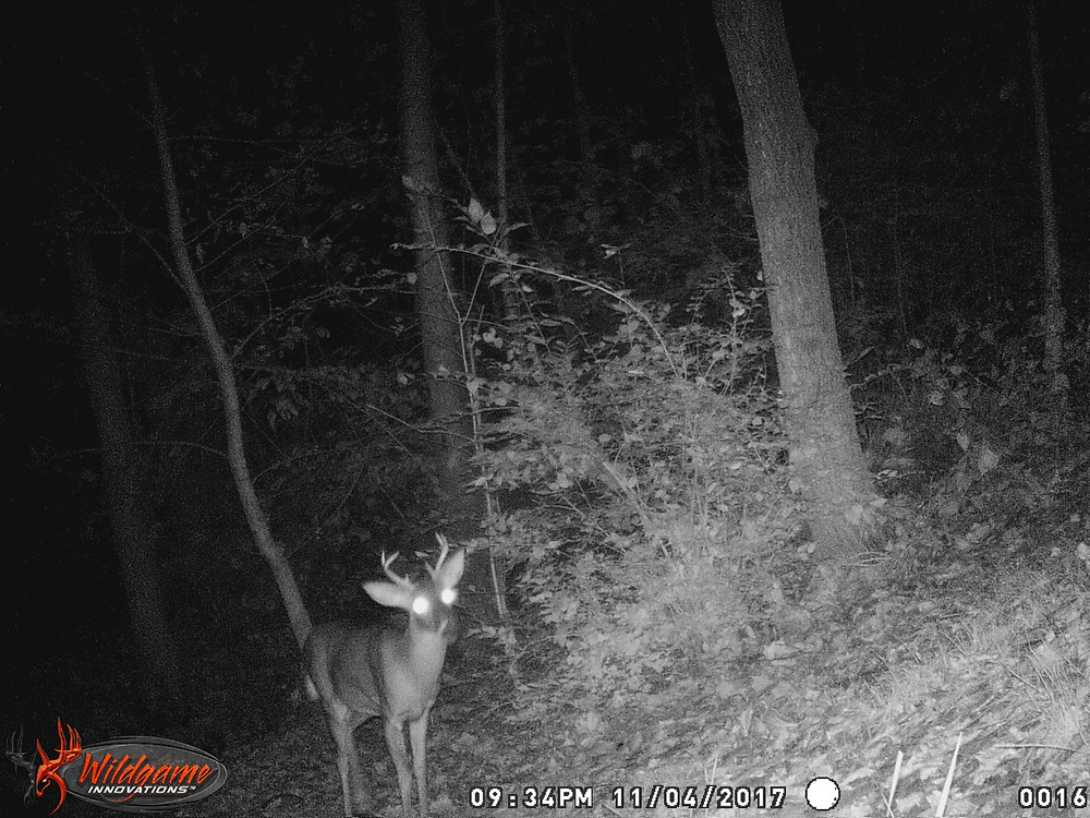 trail cam at night