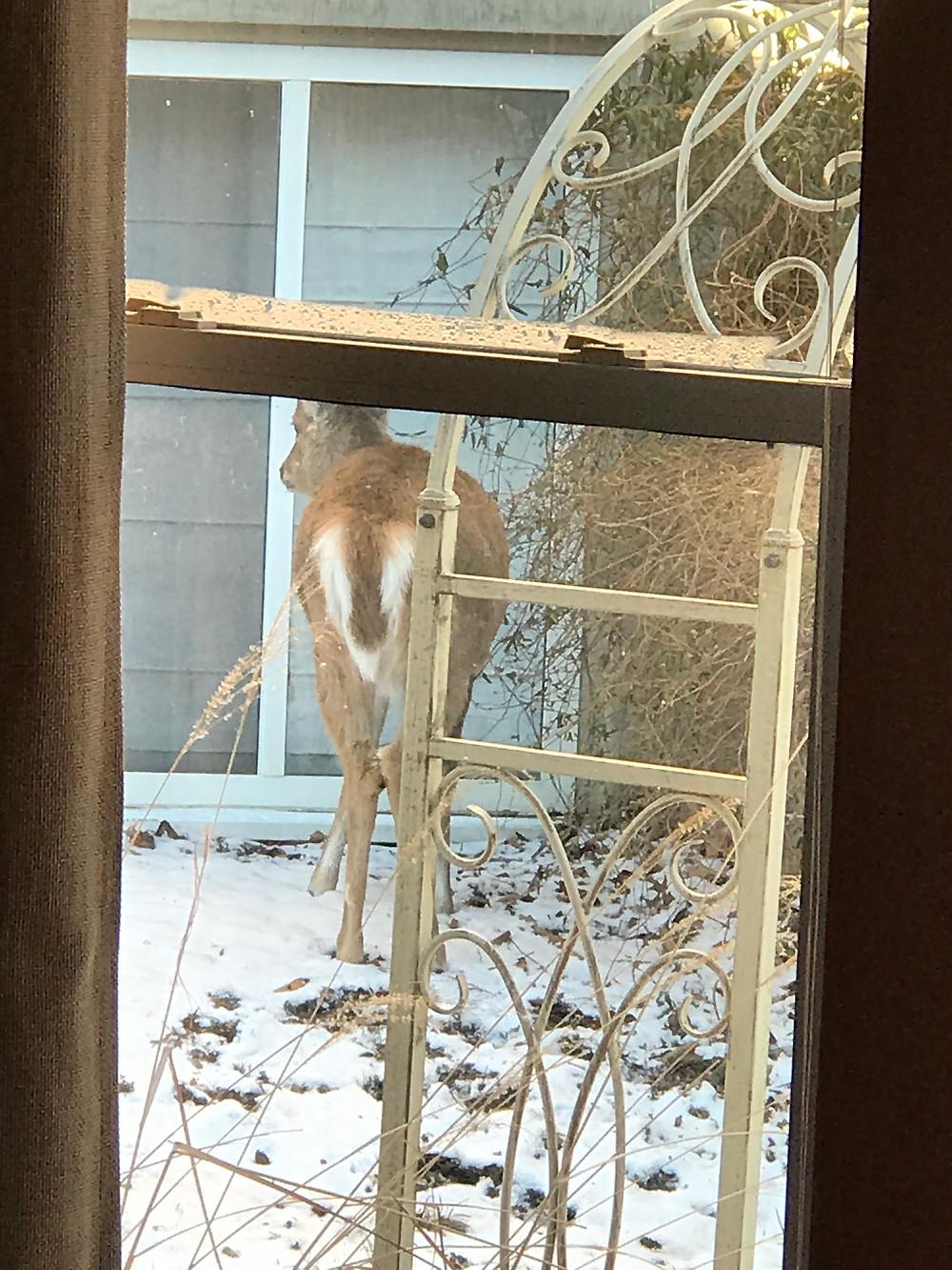deer eating between houses