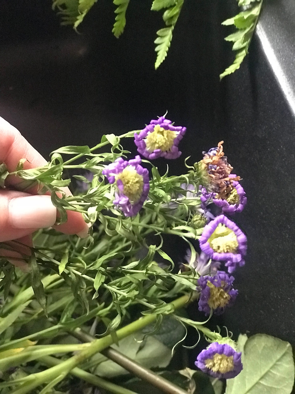 cutting the asters