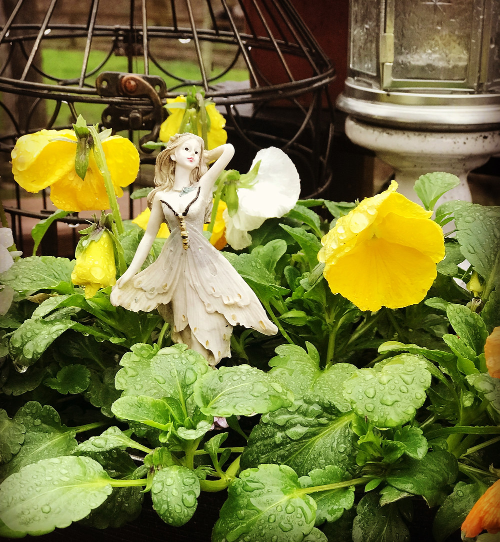 pansies and fairy
