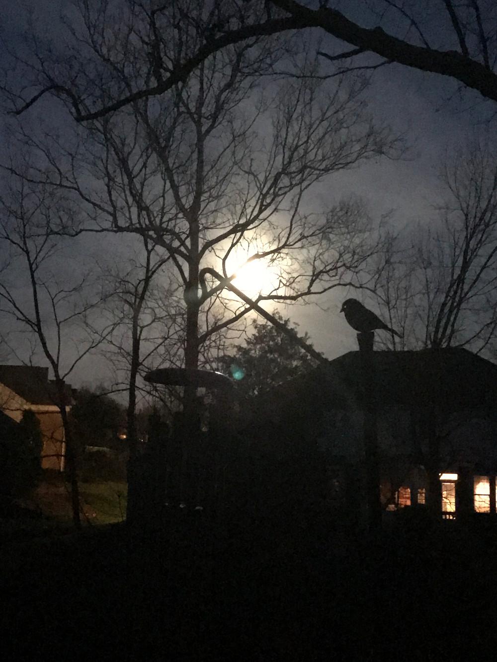 the moon in my backyard