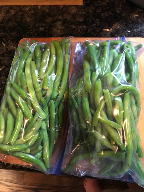 green beans ready for the freezer