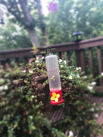 my foggy hummingbird feeder