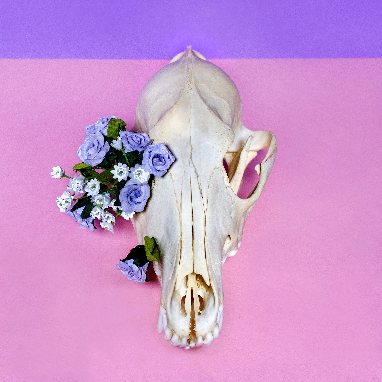 Skull & Plastic Flowers