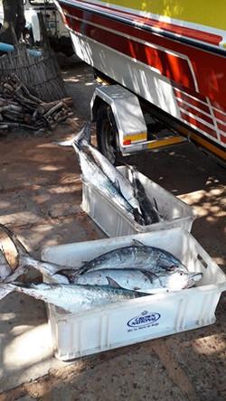 Chartered Fishing