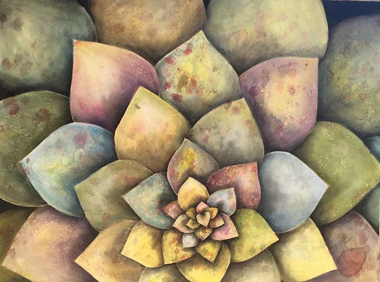 Garden Mandala, by Ansley Pye