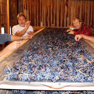 Grapes for Appassimento wine.